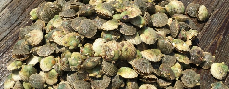 Scalloping Experience in Crystal River, FL