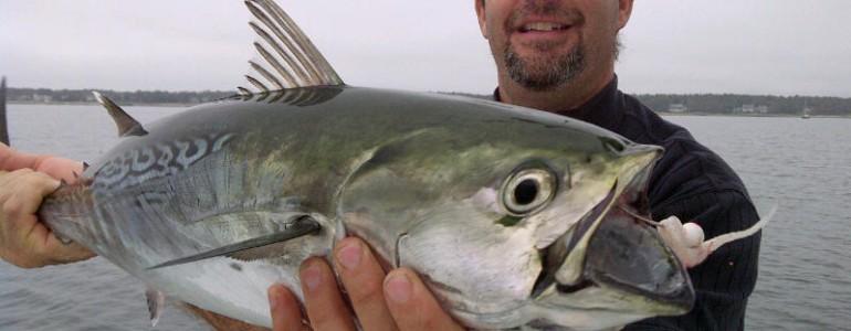 False Albacore Fishing in Cape Cod, MA